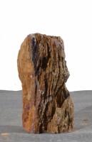 Versteinertes Holz  HZ15123