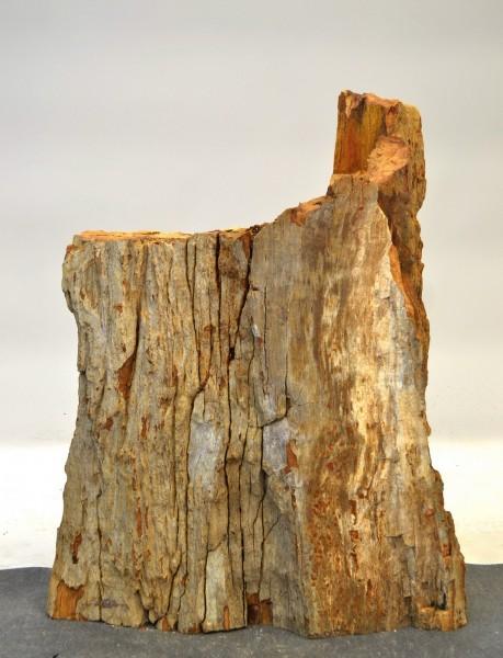 Versteinertes Holz HZ17789