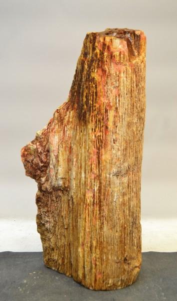 Versteinertes Holz HZ17773