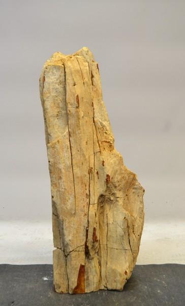 Versteinertes Holz HZ17785