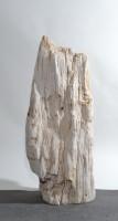 Versteinertes Holz  HZ15843