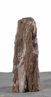Versteinertes Holz  HZ15127