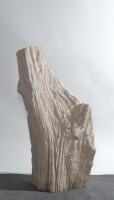 Versteinertes Holz  HZ15845